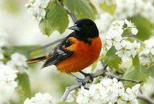 Awesome  most beutiful birds of pakistsn