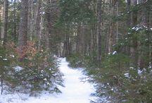 Waldo County {Maine}