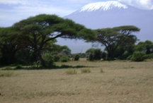 Mt Kilimanjaro View from Ol Tukai Lodge / by Ol Tukai Lodge Amboseli