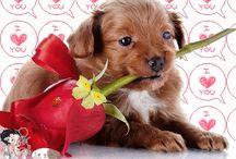 Cuki  állatok-cute animals..