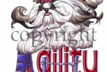 Cute Shih Tzus / There is no such thing as an ugly Shih Tzu. These little Lion Dogs prove it!