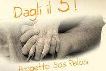 DAGLI IL 5 - Progetto Sos Pelosi
