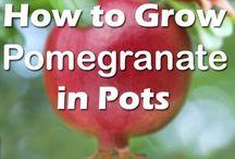 pots fruit and vegitables