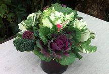 veggie decorative ideas