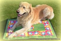 CarpetTherapy for Dogs