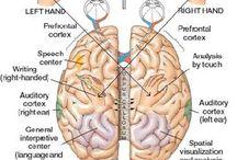 The Brain / by Brain Balance Georgia