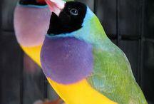 bird.a