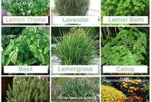 záhrada, rastlinky