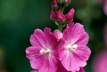 GARDEN~Flowers & Plants / by Janet Rollins