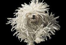 dog images / by Lara Blair