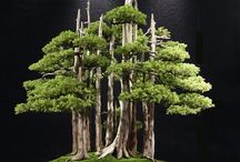 Bonsai / Bonsai. The art of making small trees mighty.