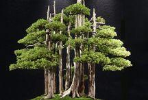 Fairy Gardens / by Melody Reno-Ewen