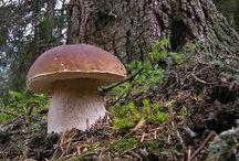 grzyby produkty z lasu