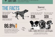 National Pitbull Awareness Day (October 24th) / National Pit Bull Awareness Day is a day of appreciation and education designed to change perceptions and stereotypes about pit bulls and their responsible owners.