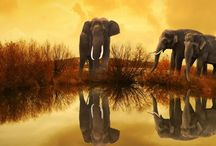 Wilde Landschaften gefährdete Tiere