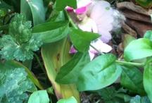 Fairies in the garden / Photos of fairies in my garden