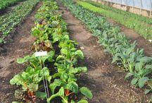 We <3 Urban Farming / Detroit Urban Farming and then some!