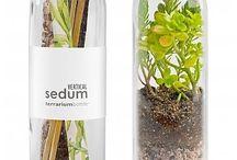 Terrific Terrariums and Indoor Plants
