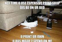 PYO Cats
