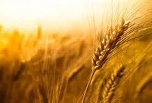 GrainMaker Blog