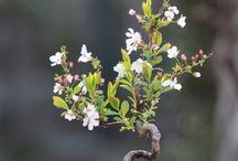 Bonsai / Mini flowers & tree