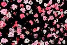 Virágos tapéták