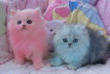 Gatos hermosos / Gatos