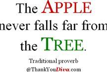 never falls
