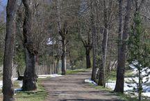 Lanser See und Lanser Moor am 27.03.2014 / Natur pur.