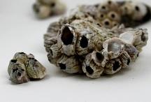 Shells, Sea Glass, Driftwood