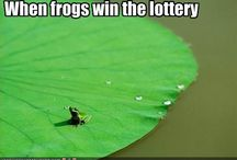 Just Froggy!