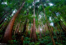 Açores Wood
