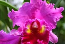 Orchideen / Pflanzen