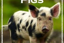 pigss