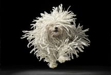 TIM FLACH (images)