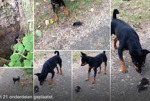 My doggy / Bruno & Bono