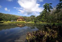 Ecolodge / Macaw Lodge is off the grid constructed with wood from our plantations 100% sustainable and self sufficient