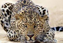 Animals / by Lisa Hubel
