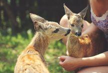 Sarny / Deers / Sarny pod opieką ośrodka.