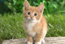 Mačky / Fotografie mačiek