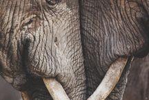 Elephants!!  / by Rebecca Brian