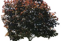 PNG stromy