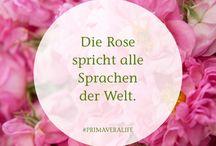 Sprüche & Zitate / Sprüche und Zitate über Natur, Umwelt, Liebe & Glück. Lass dich inspirieren #primaveralife