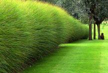 Sövények