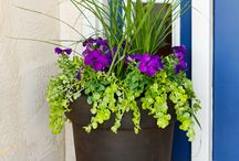 Gardening / Potted Planters