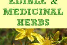 Edible Medicinal Herbs