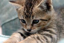Animalillos_ Especial gatos / Gatos gatos gatos
