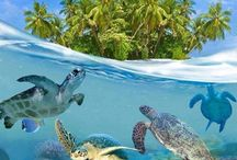 Travel / Just a bunch of my must see travel destinations and animals