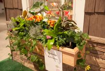 Window Boxes We Love! / From the 2014 Chicago Flower & Garden Show / by Chicago Flower & Garden Show, presented by Mariano's