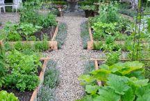 Canteiros de horta,flor,ervas e mais
